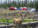 High Adventure Camp in Idaho meeting a neighbor